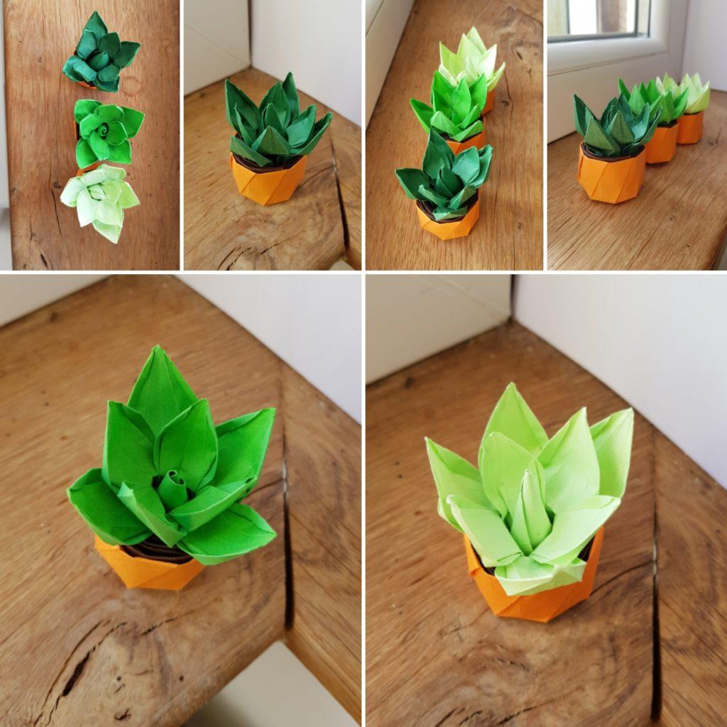 marigami origami succulente